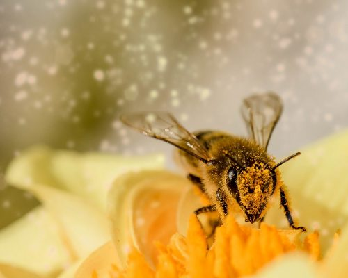 hover_fly_insect_animal_fly_mist_bee_blossom_bloom_sitting_on_flower-438273